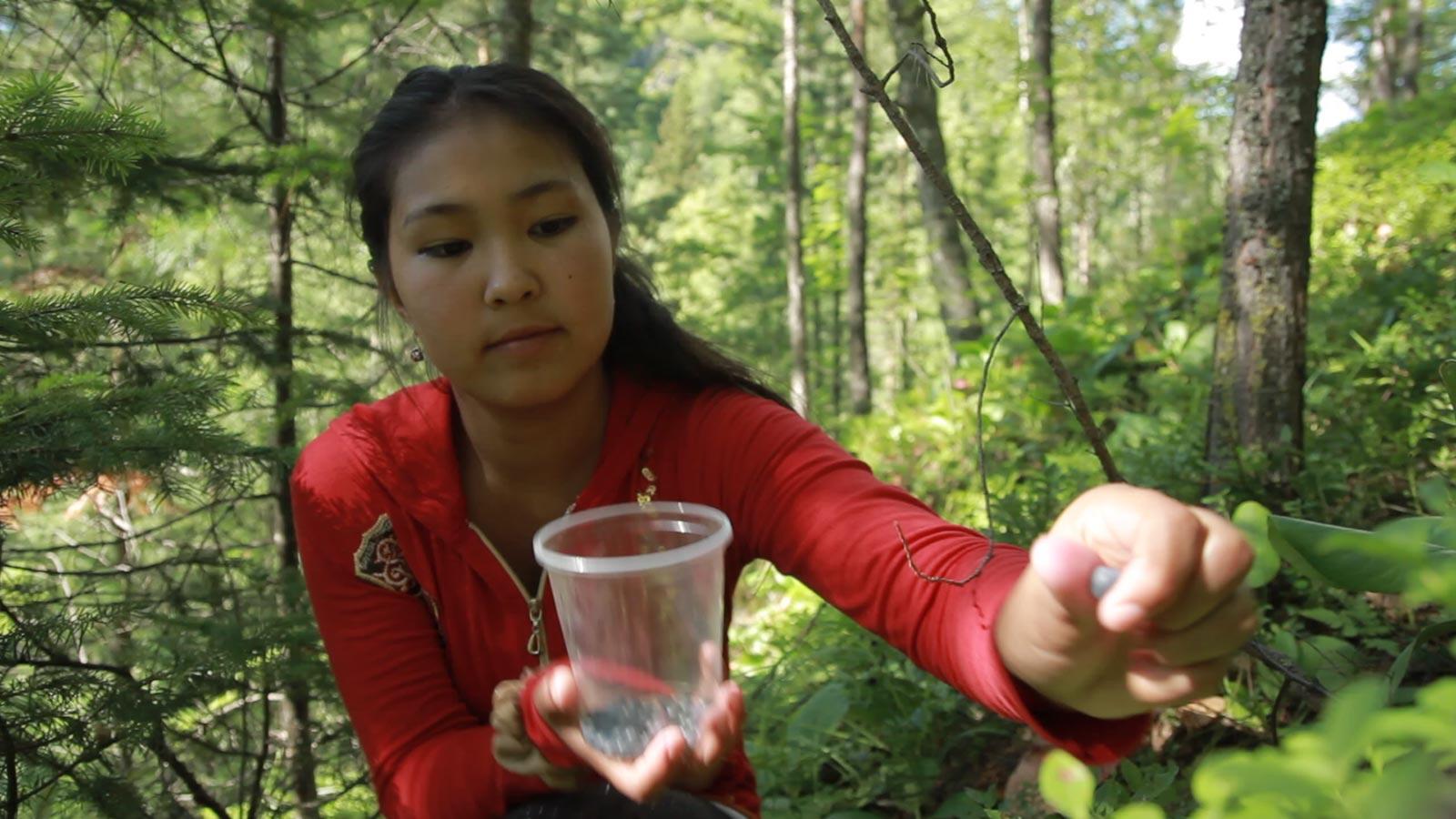 Марина собирает чернику в тайге.